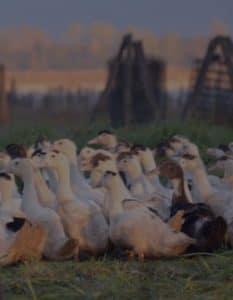 Qualité du foie gras de canard Chez Cazalier