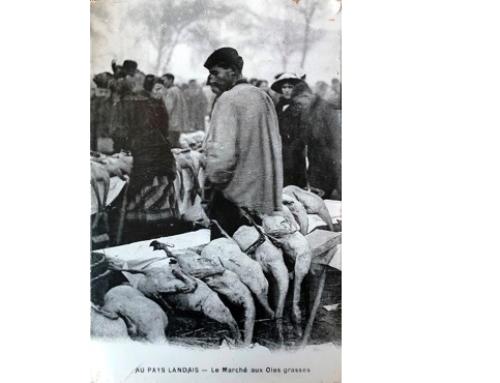 Les marchés aux gras : une tradition pour notre canard