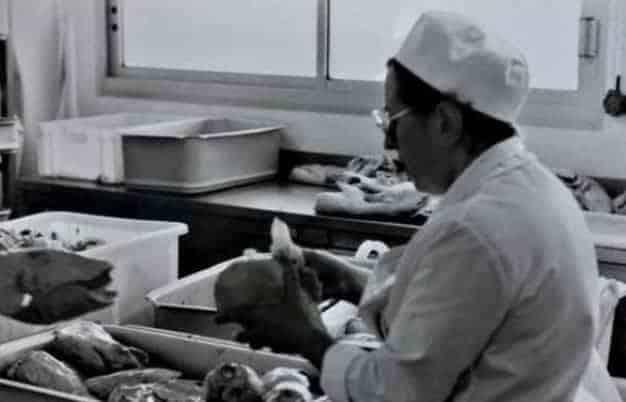 Producteur Foie Gras de Canard